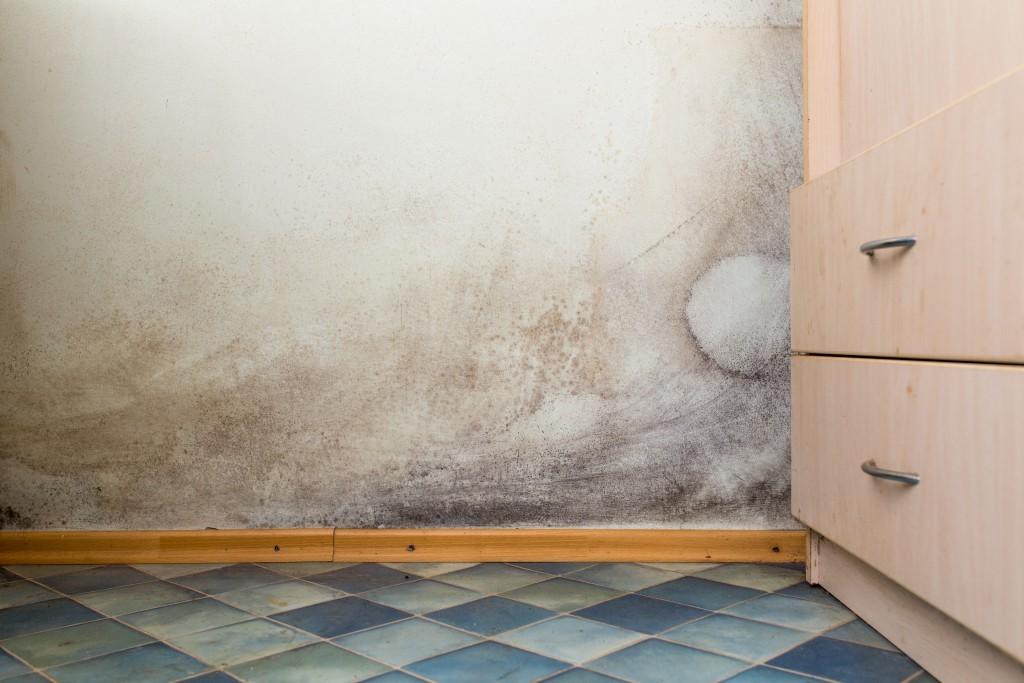Mofo nas paredes, como se prevenir e resolver esse problema?