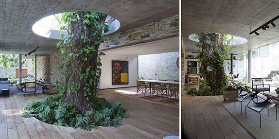 Manter a Vegetação no Edifício